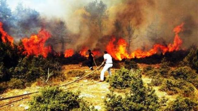 Çubuk'ta Orman Yangını