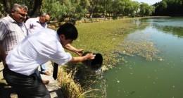 Karagöl'e Abant Alası Alabalık Yavrusu Salındı