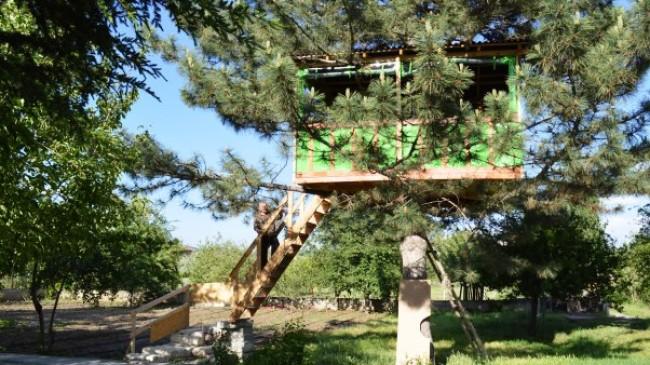 Çam Ağacına Ağaçtan Çardak